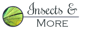 Insects and More-Logo